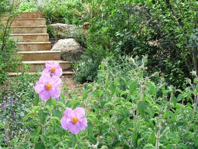 מדרגות בגינה