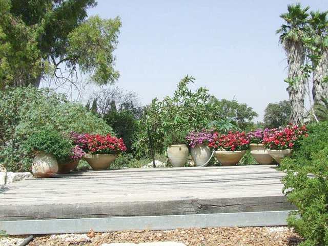 דק בגינה אחורית כתוחם צמחייה