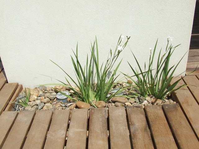 תכנון דק וצמחייה
